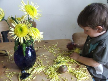 yellow chrysantemum